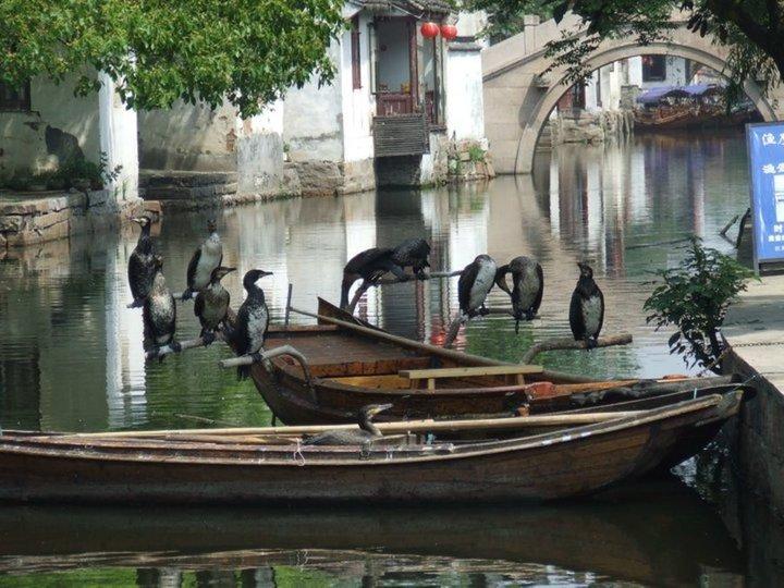 ZHANZHOUANG - Grand Canal