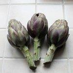 Artichaut 'Violet de Provence'