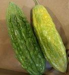 Concombre amer - Momordica charantia