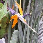 Oiseau du paradis - Strelitzia reginae