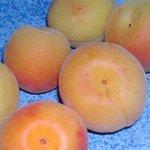 Abricot - Prunus armeniaca
