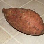 Patate douce - Ipomoea batatas