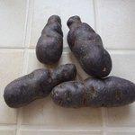 Pomme de terre 'Vitelotte'