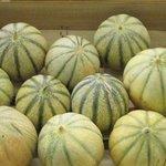 Melon - Cucumis melo