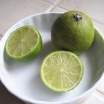Citron vert - Citrus limon - Agrume