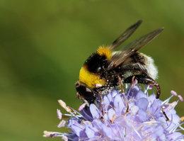 Protéger nos abeilles