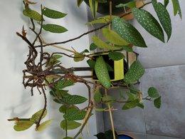 identité plante verte