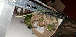 Quel légume mettre dans un potager à l'ombre ?