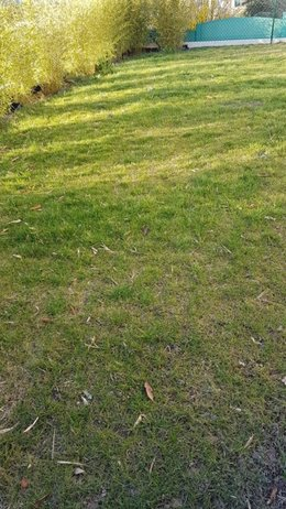 Remise en état de la pelouse