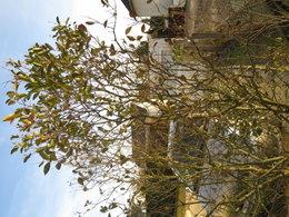 Arbustes de mon jardin