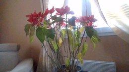 sauvetage d une plante