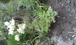 plante inconue