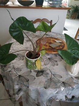 identité de cette plante