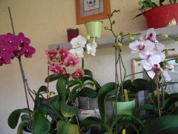 Sauver une orchidée en fleurs mais racines pourries