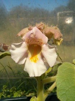 Ma fleur mystérieuse !