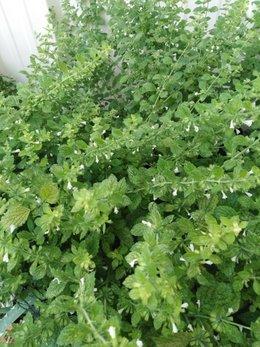 Qui connait  cette plante ?