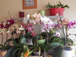 Orchidée sèche