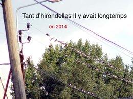Hirondelles