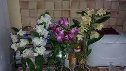 Vente des orchidées