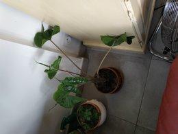 nom de plante
