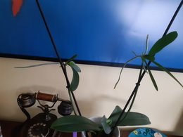 Recuperation orchidées