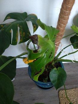 Mes plantes sont tristes :(