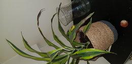 Besoin d'aide pour ma plante