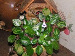 plante malade