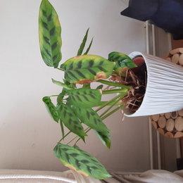 Ma plante a du mal a repousser... Je ne comprend pas..