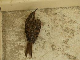 Petit oiseau ?