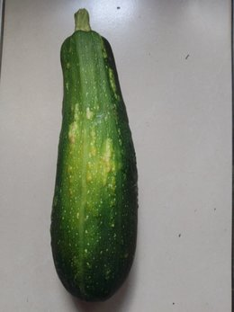 Courgettes malades????