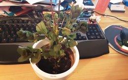 quel est cette plante