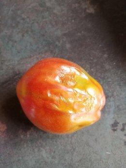 Tâche sur tomate