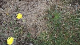 Identification de cette herbe ?