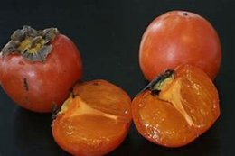 Arbre fruitier inconnu