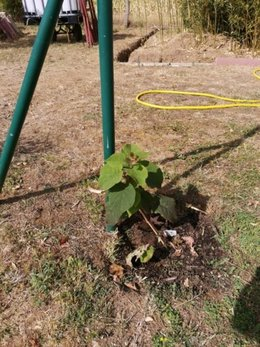 installation kiwi