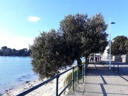 Quel est cet arbre de bord de mer ?