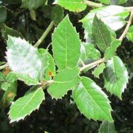 une plante inconnue