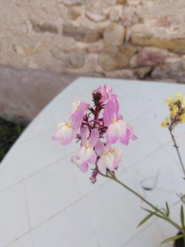 Connaissez vous cette fleur ?