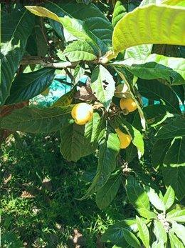 Qui peut m'aider pour ces fruits