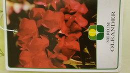 mon Laurier rose rouge fait des fleurs blanches
