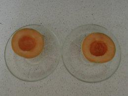Quand cueillir le melon