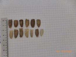 Connaissez vous ces graines ?
