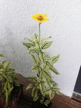 Quelle est cette fleur jaune ?