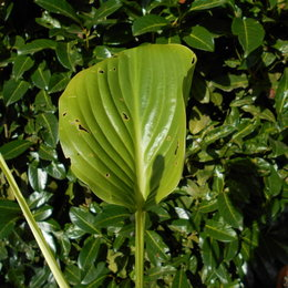 Quelle est cette plante