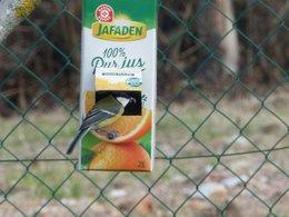 Donnez vous à manger aux oiseaux l'hiver ?