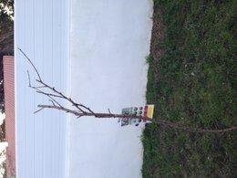 Peut on récupérer le taille d un arbre fruitier ?