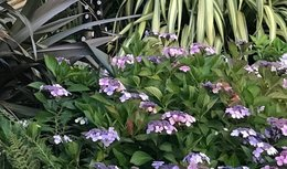Identification plantes