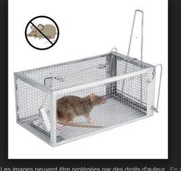 Alerte aux souris!