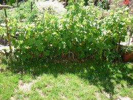 Structure pour vigne